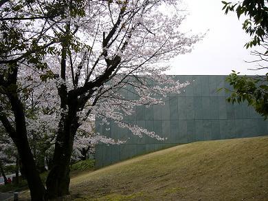 20090407-P1020194sakuratoyotasi.JPG